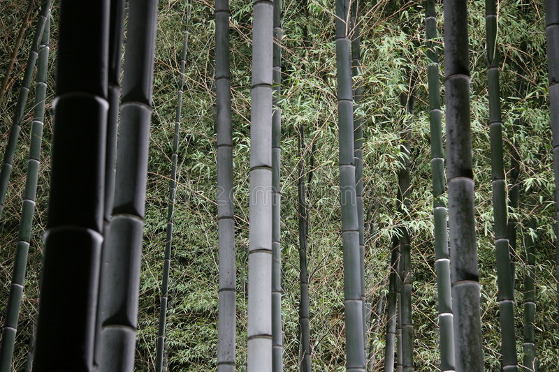 Download Bamboo Forest at Night stock image. Image of tree, bamboo - 42883