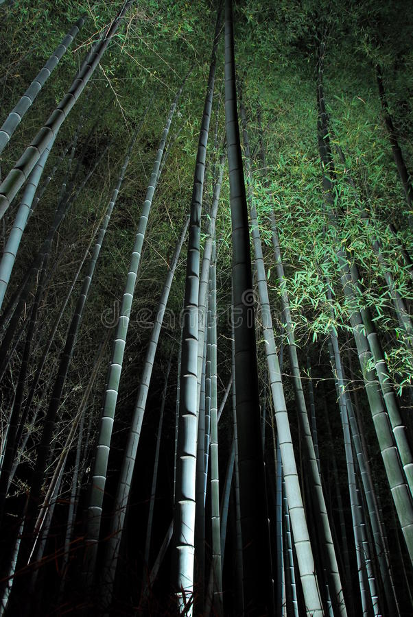 Bamboo forest at night stock images