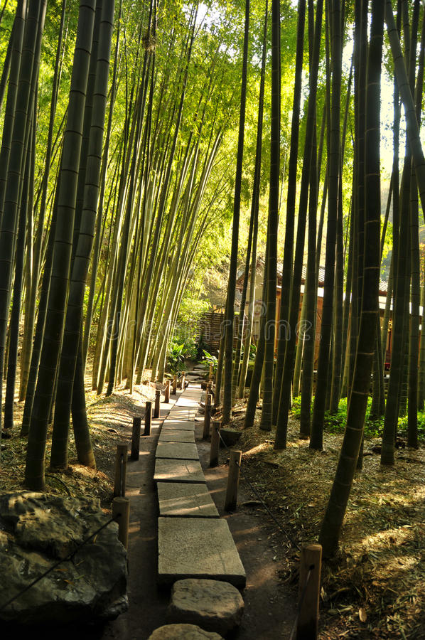 Download Bamboo Forest  Path stock photo. Image of road, tree - 16581546