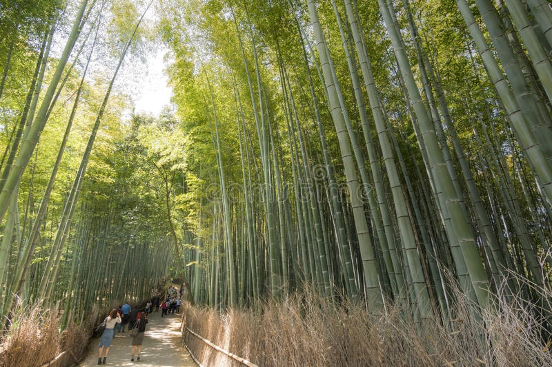 Bamboo forest path stock photography