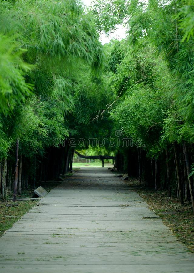 Bamboo forest and pathway. Season, spring, view, grass, summer, tall, day, park, natural, walkway, asian, landscape, branch, tree, leaf, outdoor, tropical, plant royalty free stock images