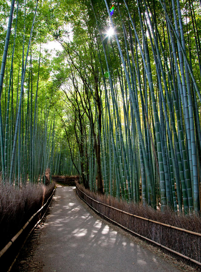 Download Bamboo Forest stock image. Image of forest, pathway, kyoto - 34791607