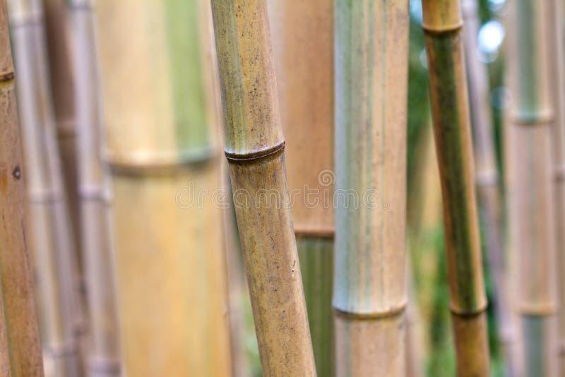 Bamboo forest texture close up stock photos
