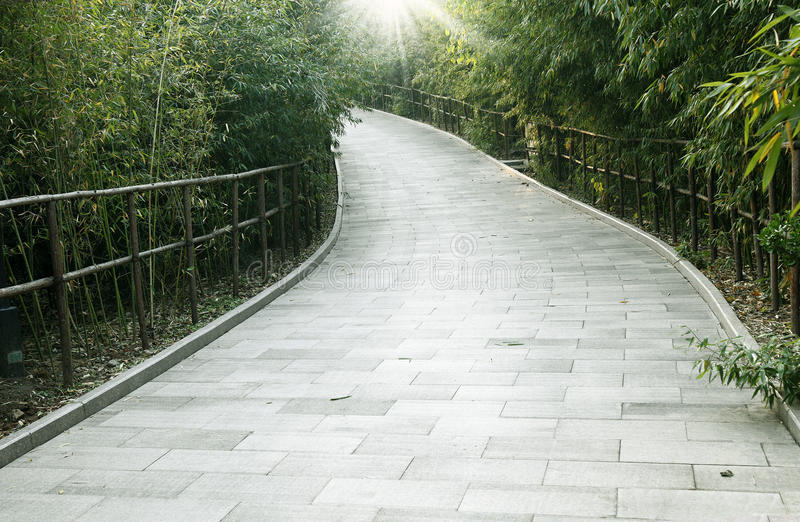 Bamboo forest trail stock photo