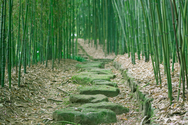 Bamboo Forest Trail Stock Image