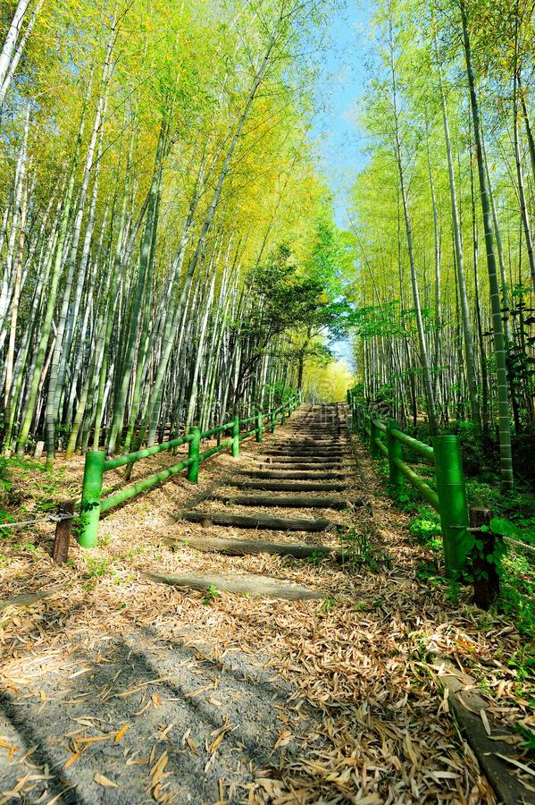 Free Bamboo Forest Walk Track Royalty Free Stock Photos - 19607218