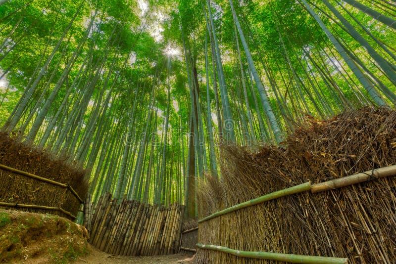 Bamboo forest and walking path in Arashiyama, Kyoto, Japan.  stock photos