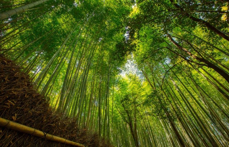 Bamboo forest and walking path in Arashiyama, Kyoto, Japan.  royalty free stock image