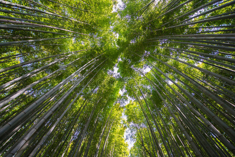 Download Bamboo forest stock image. Image of green, folks, path - 30591735