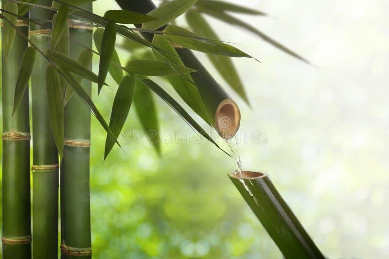 Bamboo fountain of zen stock image