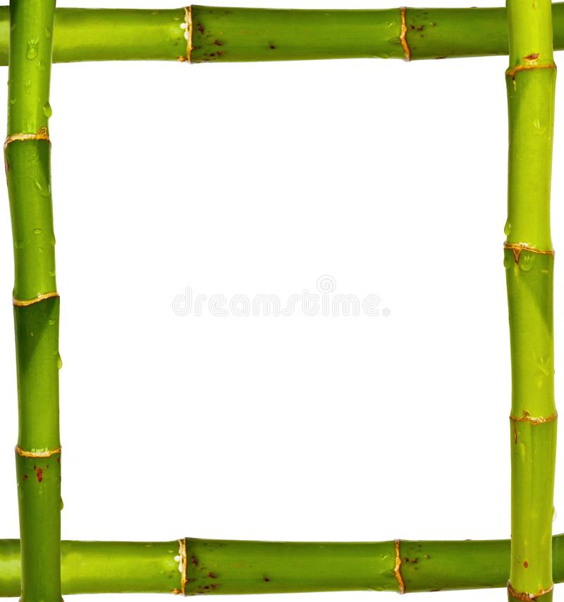 Bamboo frame made of stems isolated on white. Background stock photography