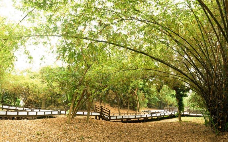 Bamboo garden. Panoramic bamboo garden of Chinese style in outdoor royalty free stock photos