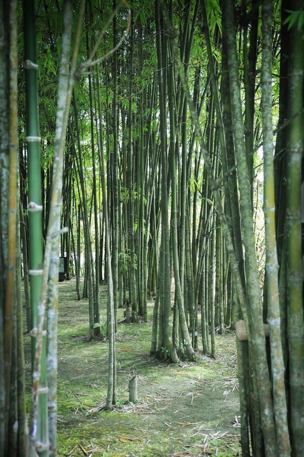 Bamboo Garden. Close up of Bamboo Garden royalty free stock photo