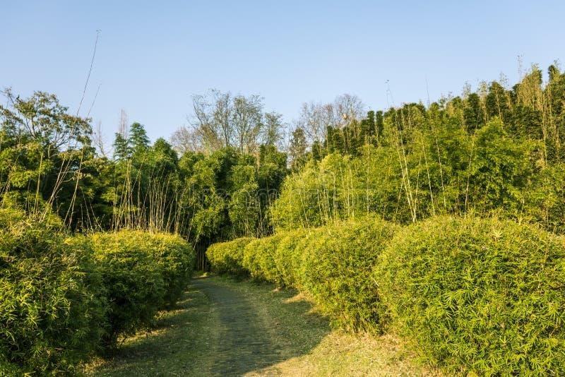 The bamboo garden royalty free stock photo