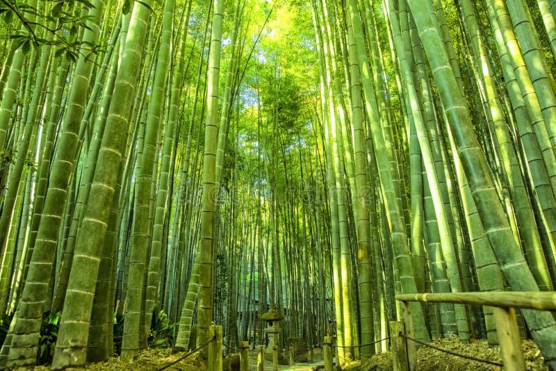Bamboo Garden in Kamakura Japan. This is Bamboo Garden in Kamakura Japan royalty free stock photos