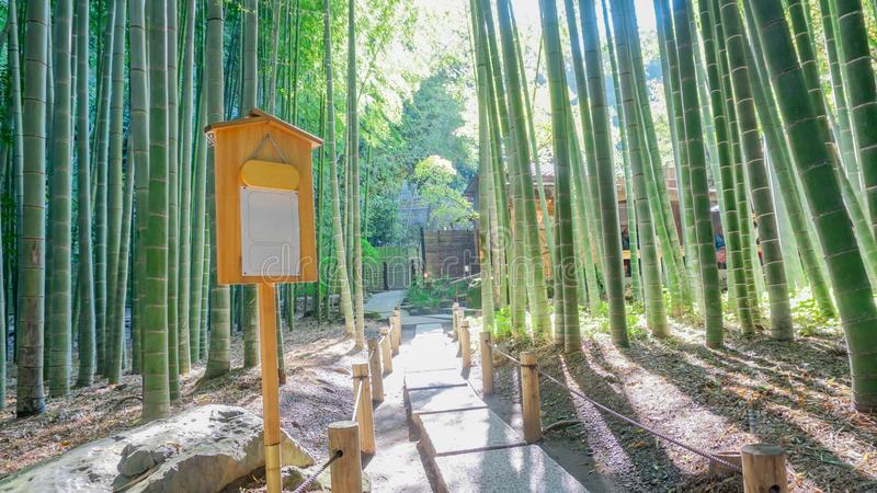 The bamboo garden with walkway, signage and sunshine at Hokoku-ji in Kamakura, Japan. The wide angle of bamboo garden with walkway, signage and sunshine at stock photography