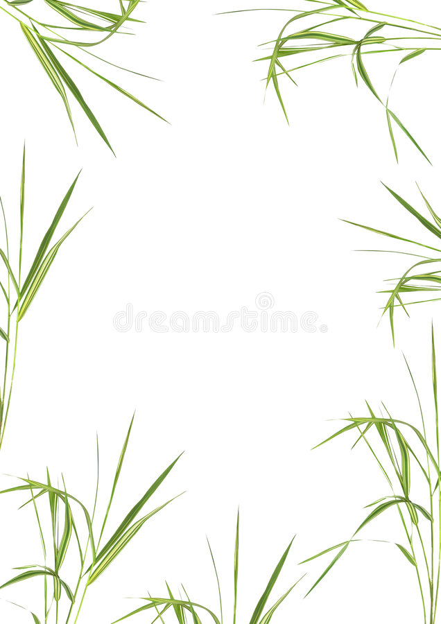 Bamboo Grass Beauty. Bamboo grass in an abstract design forming a frame over white background stock images
