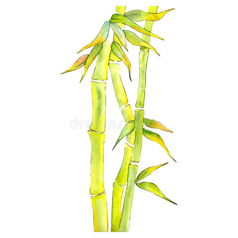 Bamboo Green leaves and steam. Watercolor background illustration set. Isolated bamboo illustration element. stock illustration