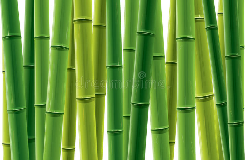 Bamboo Grove. Fresh bamboo grove vector illustration. Only applied in gradient vector illustration