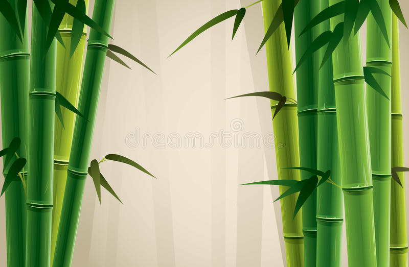 Bamboo Grove. Fresh bamboo grove illustration. Only applied in gradient royalty free illustration