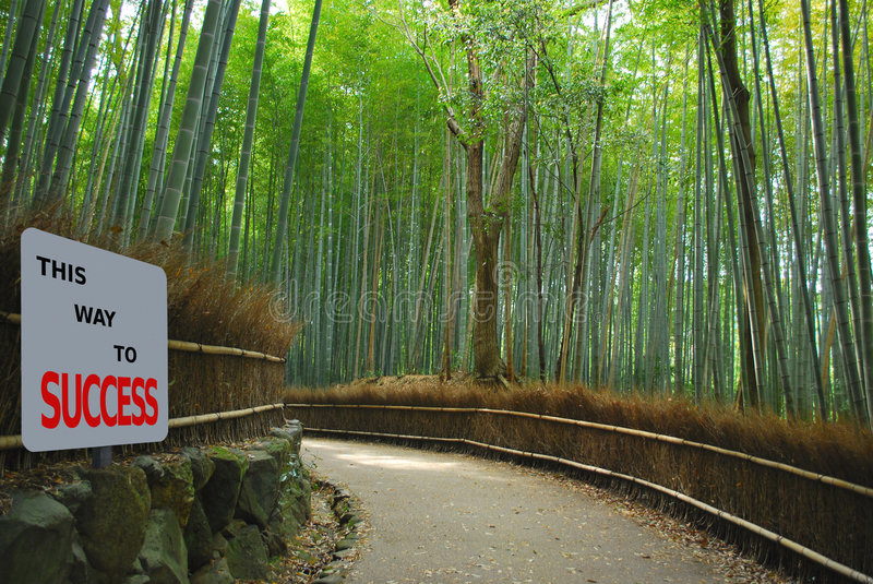 Bamboo grove. With signage to success royalty free stock image