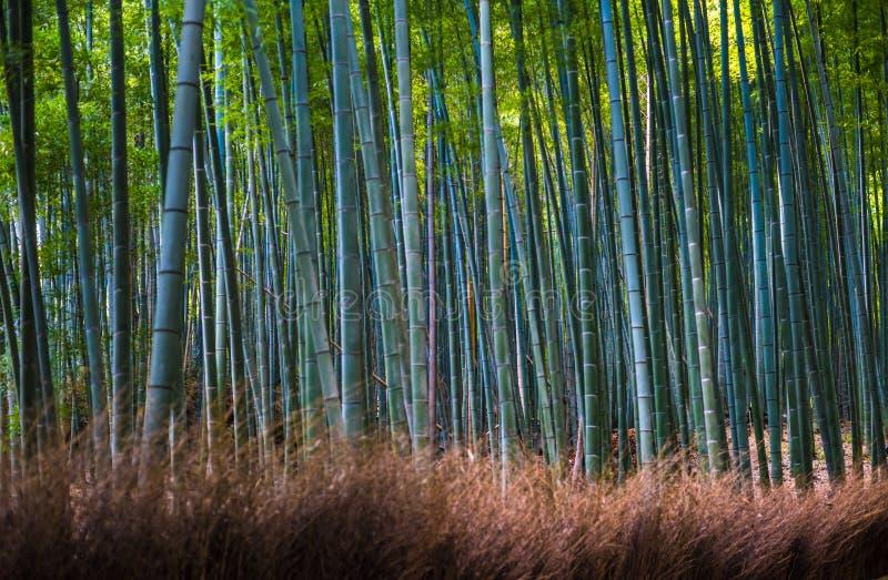 Bamboo grove in Arashiyama, Kyoto, Japan royalty free stock photo
