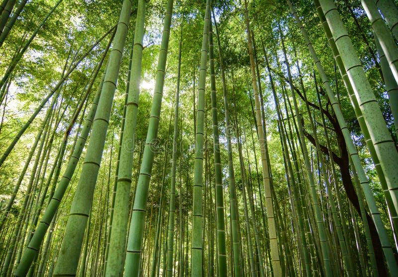 Bamboo grove i Arashiyama i Kyoto, Japan arkivbilder