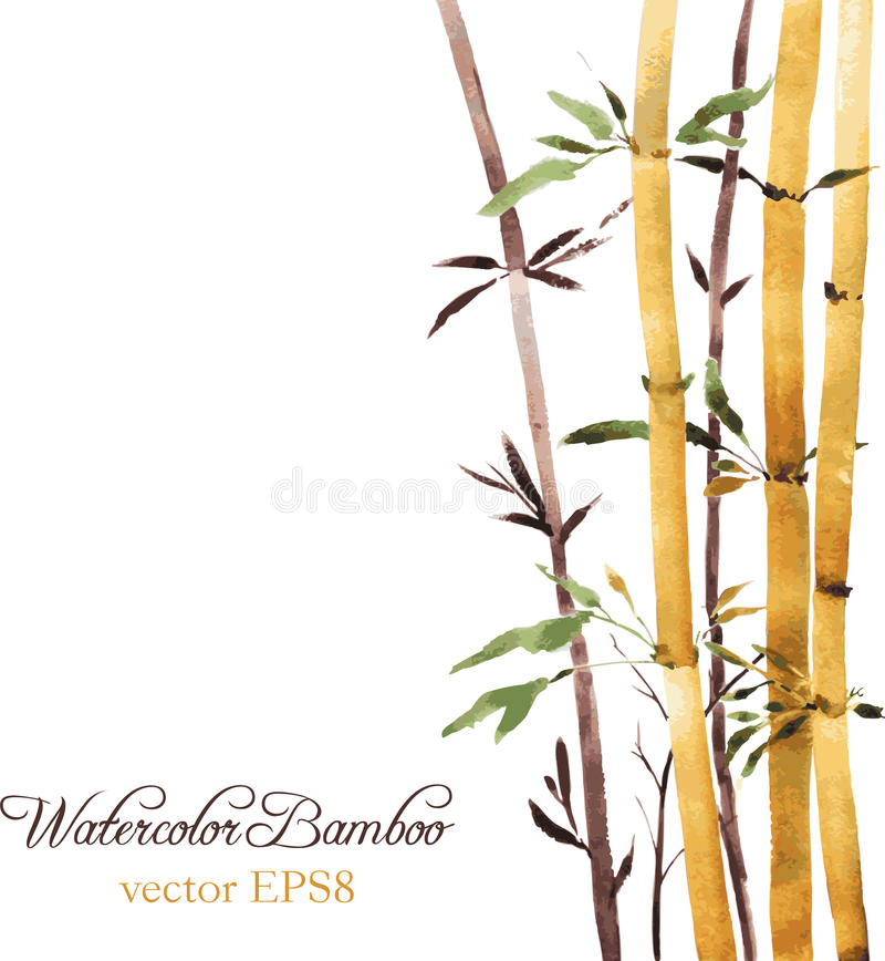 Bamboo grove. Watercolor bamboo grove, hand drawn vector illustration stock illustration