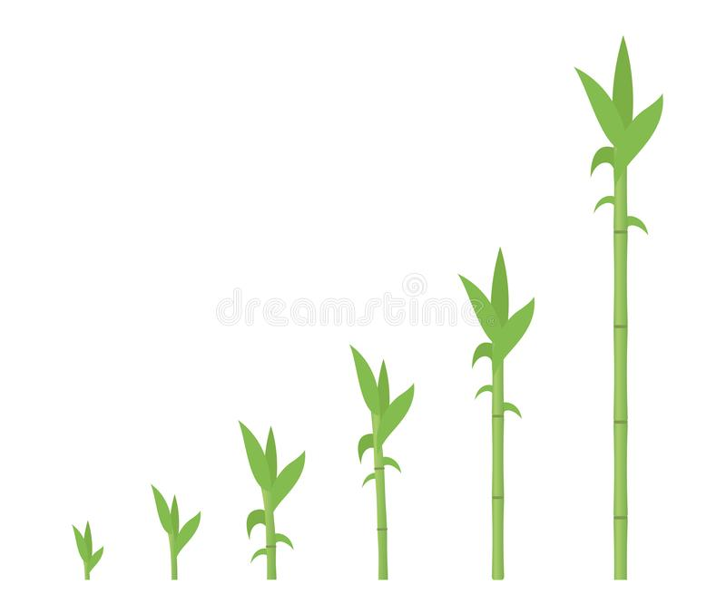 Bamboo growth stages. Bamboos ripening period progression. Bambusa life cycle animation plant phases development. Bambos with. Roots. Green leaves and stalk royalty free illustration