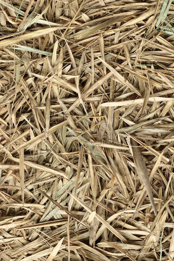 Bamboo hay stack dry in autumn , forest bamboo leaved textured brown color background . royalty free stock photography