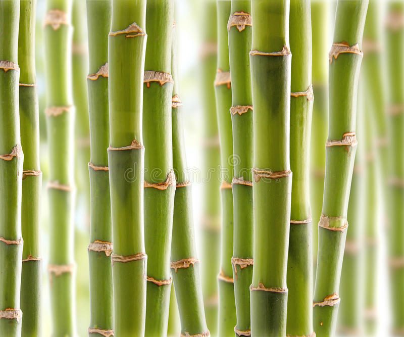 Bamboo Jungle royalty free stock images