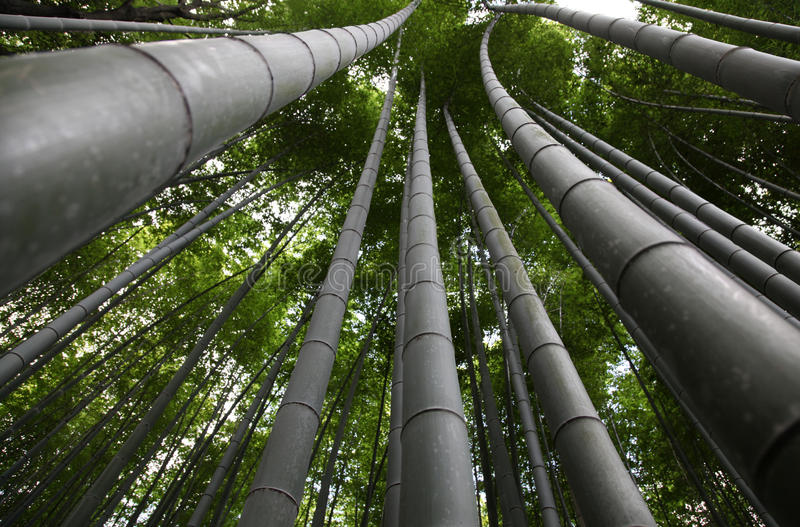 Download Bamboo Kyoto Japan stock photo. Image of quiet, abstract - 13167530