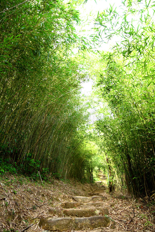 Download Bamboo lane stock image. Image of color, forest, green - 17109731