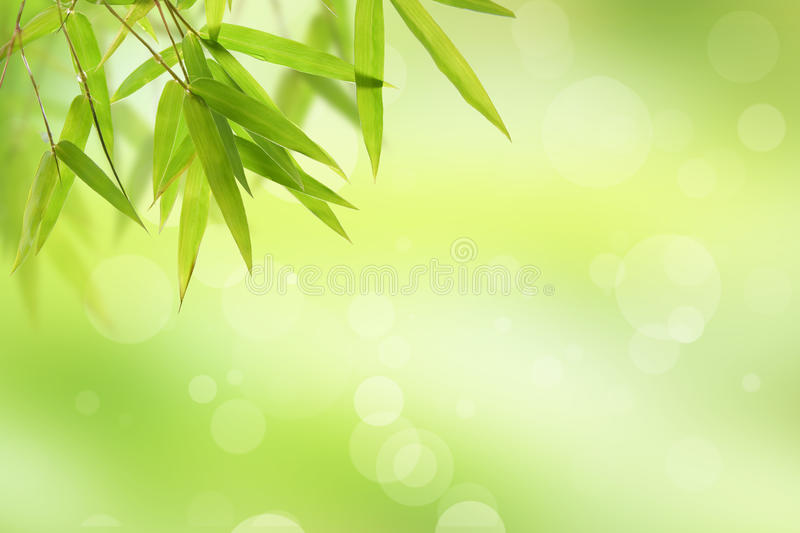 Bamboo leaf and abstract green background bokeh royalty free stock photo