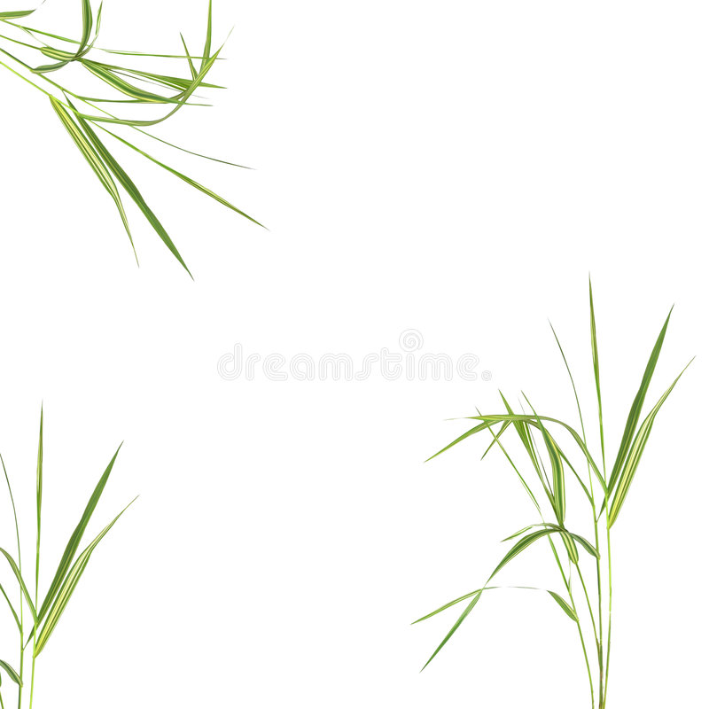 Bamboo Leaf Grass. Zen abstract of bamboo leaf grass over white background stock photos