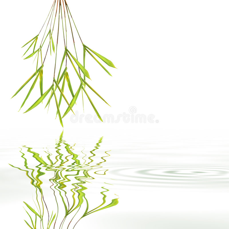 Bamboo Leaf Grass Abstract. With reflection over rippled gray water, against white background royalty free illustration