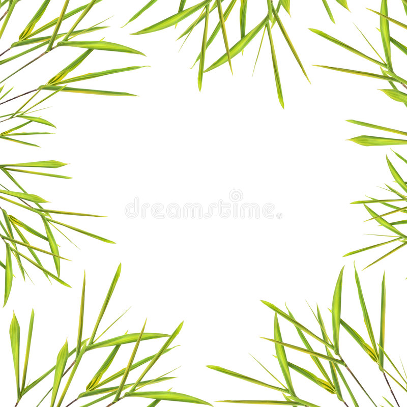 Bamboo Leaf Grass Border. Bamboo leaf grass creating an abstract border, over white background royalty free stock photos