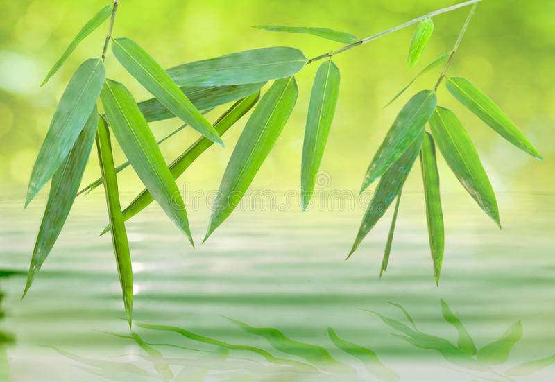 Download Bamboo Leaf Over Water (spirit Of Zen) Stock Photo - Image: 24896868
