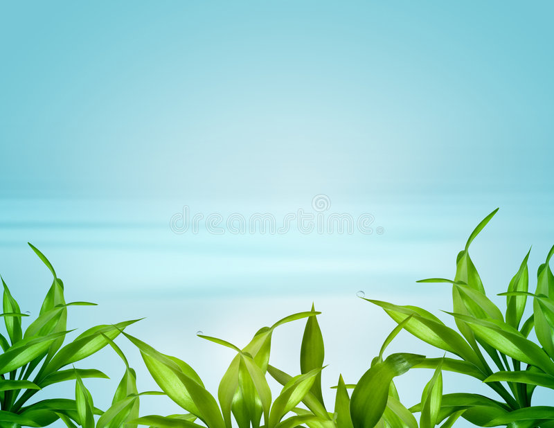 Bamboo leafs over blue background. Bamboo leafs over abstract blue background stock photos