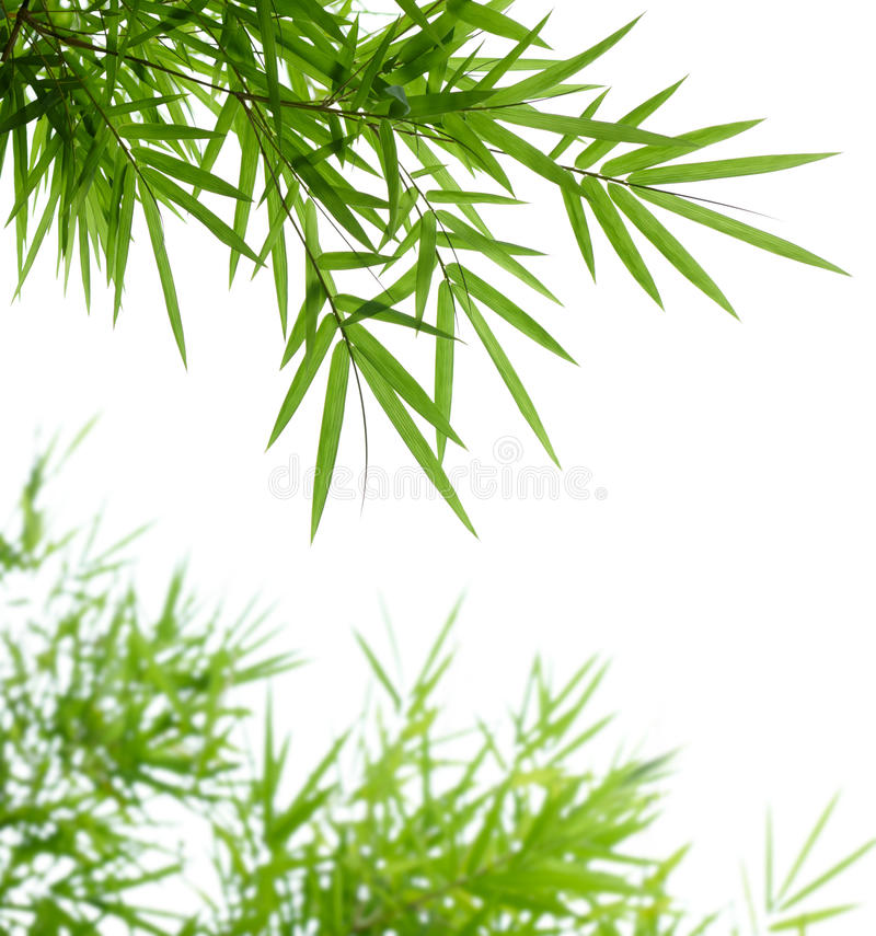 Download Bamboo leaves stock image. Image of leaf, green, branch - 10161021