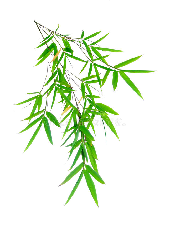 Download Bamboo leaves stock image. Image of climate, biology - 14860589
