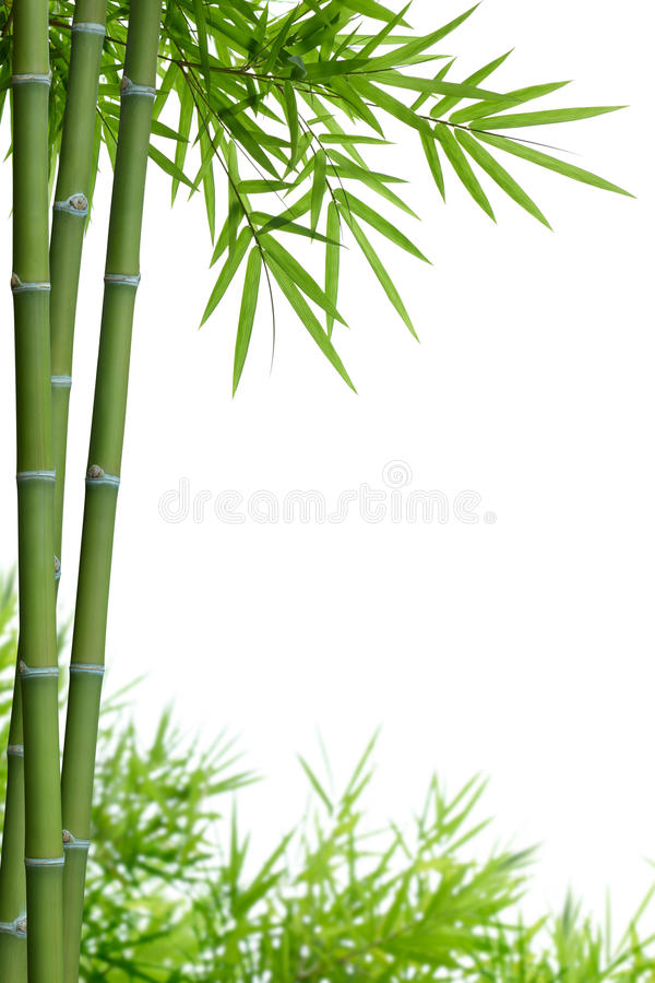 Bamboo with leaves royalty free stock image