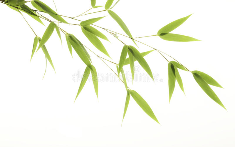 Download Bamboo Leaves Stock Image - Image: 26715231