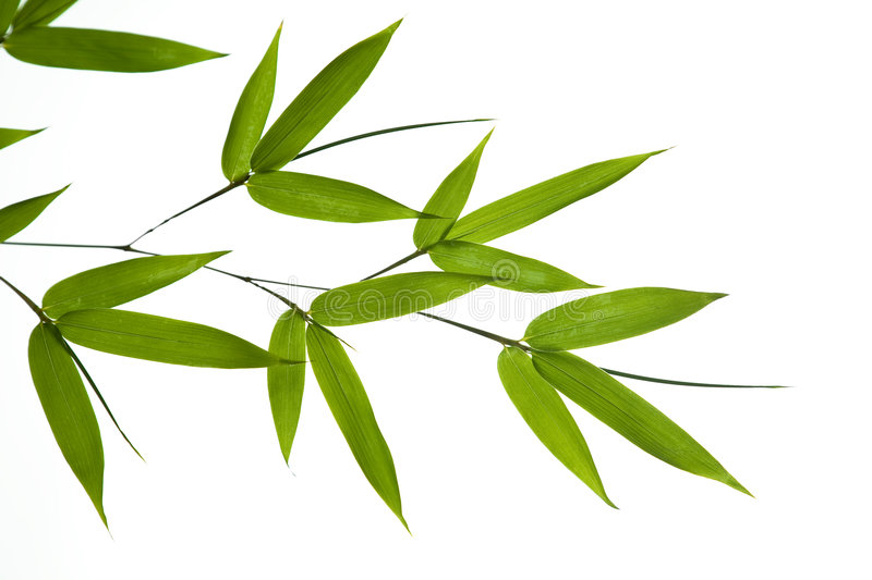 Download Bamboo- leaves stock image. Image of grass, green, branch - 3302893