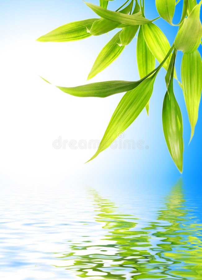 Download Bamboo leaves stock image. Image of biology, flora, botany - 4642011