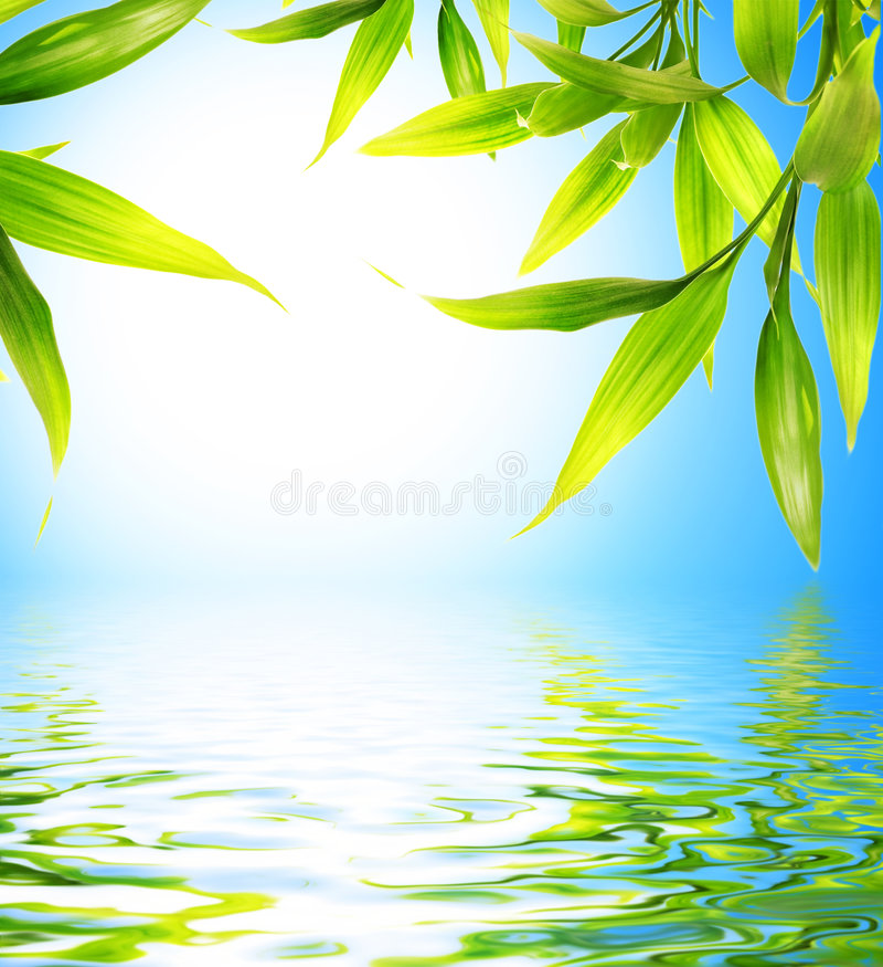Bamboo leaves vector illustration