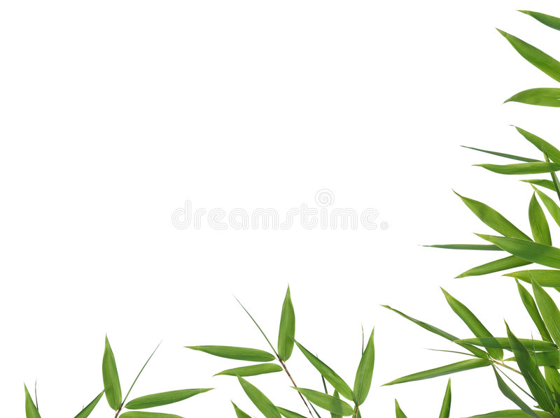 Download Bamboo- leaves stock photo. Image of white, background - 6820518