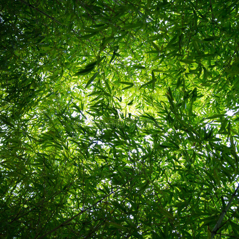 Bamboo Leaves From Above Royalty Free Stock Image