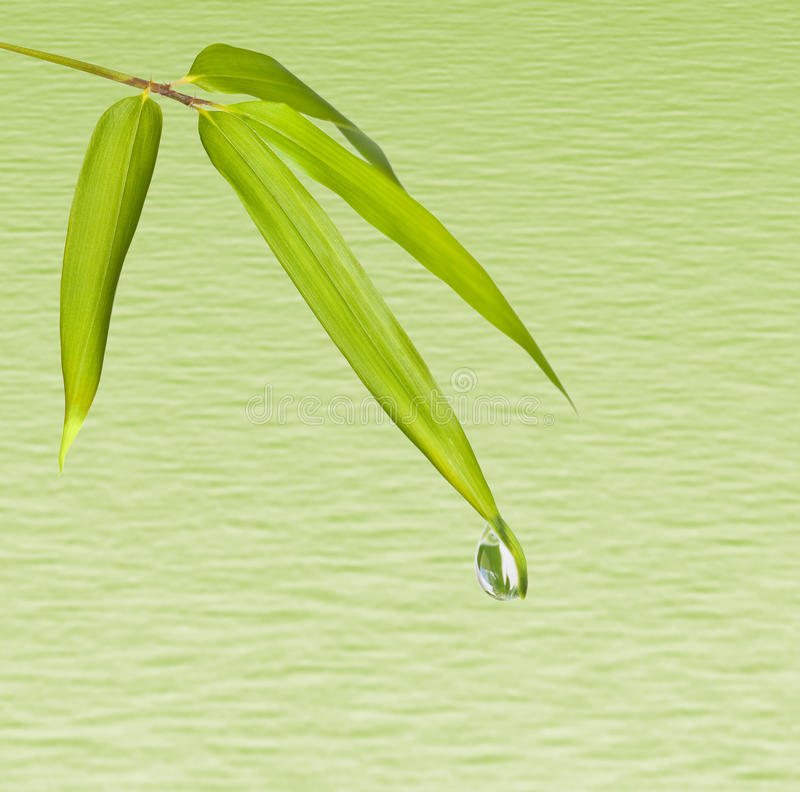 Free Bamboo Leaves And Water Drop Royalty Free Stock Photo - 12044025