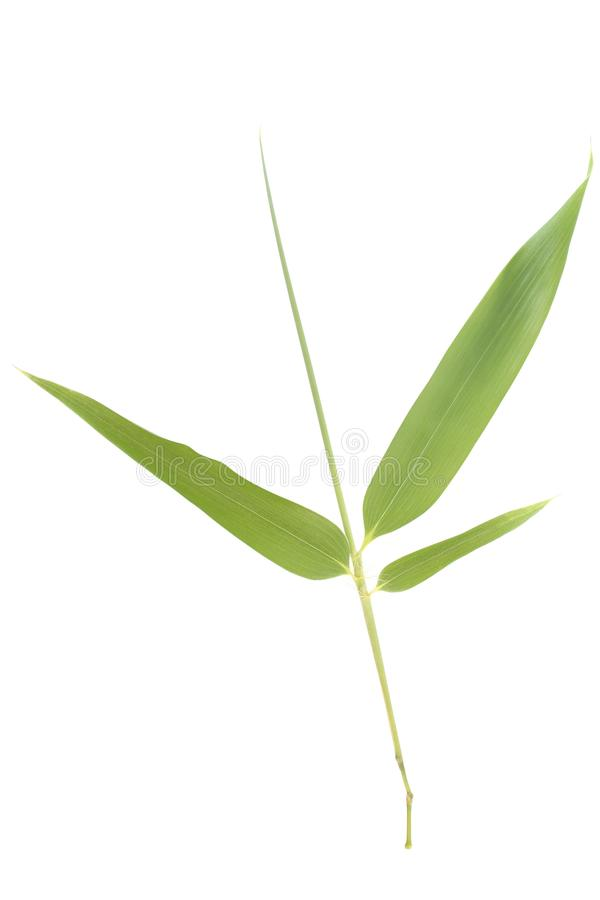Bamboo leaves. Isolated on white background stock photos